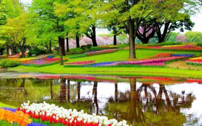 Idee Giardino: Come Coltivare i Bulbi Da Fiore Più Richiesti