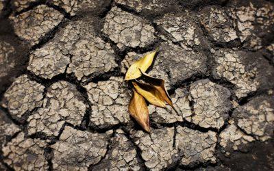 Giardinaggio E Cambiamenti Climatici, Cosa Fare E Come Comportarsi?